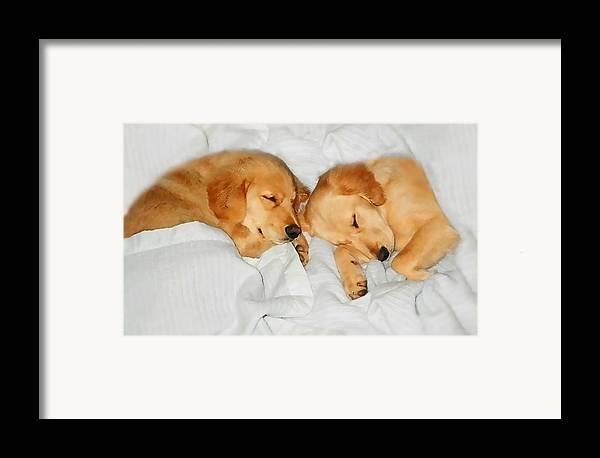 Golden Retriever Framed Print featuring the photograph Golden Retriever Dog Puppies Sleeping by Jennie Marie Schell