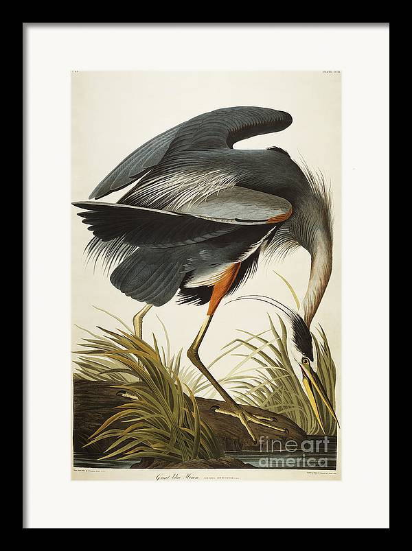 Great Blue Heron Framed Prints, Great Blue Heron Framed ...