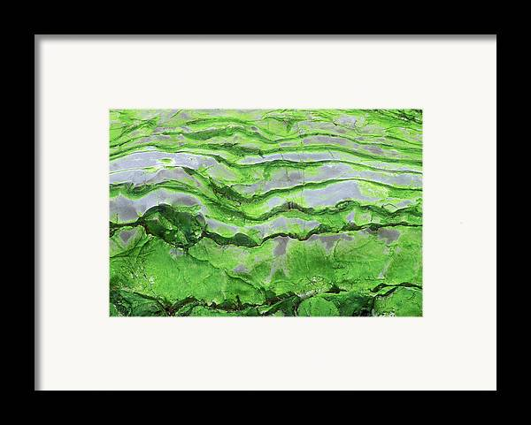 Horizontal Framed Print featuring the photograph Green Algae Patterns On Exposed Rock At Low Tide, Gros Morne National Park, Ontario, Canada by Altrendo Nature