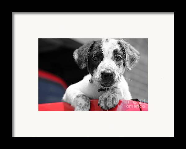 Dogs Framed Print featuring the photograph Hmmm by Amanda Barcon
