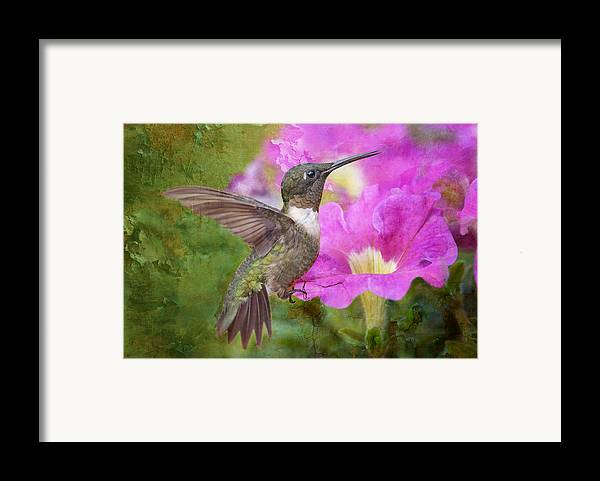 Hummingbird Framed Print featuring the photograph Hummingbird And Petunias by Bonnie Barry