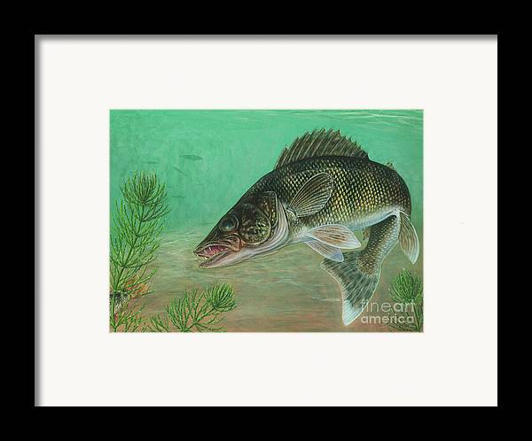 Side View Framed Print featuring the digital art Illustration Of A Walleye Swimming by Carlyn Iverson
