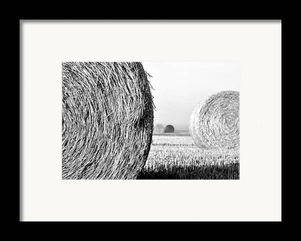 Black And White Framed Print featuring the photograph In The Hay -black And White by Dana Walton