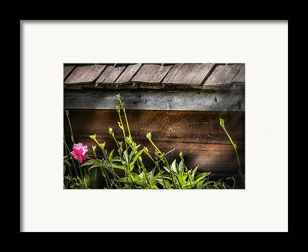 Suburbanscenes Framed Print featuring the photograph Insect - Spider - Charlottes Web by Mike Savad