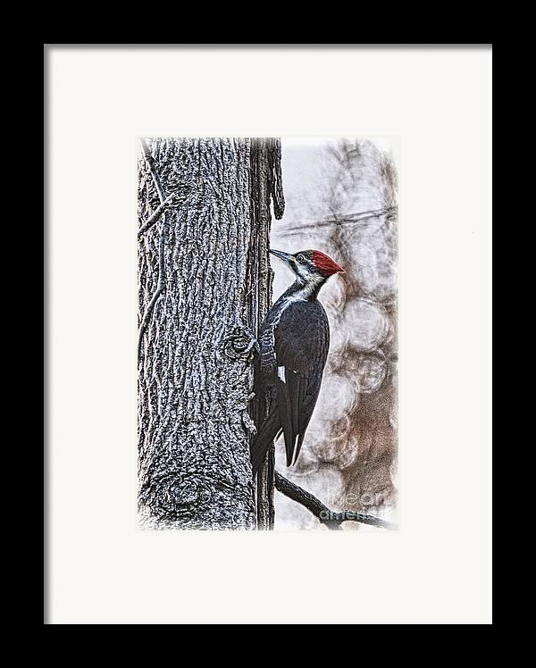 Woodpecker Framed Print featuring the photograph Knock Knock by Lois Bryan