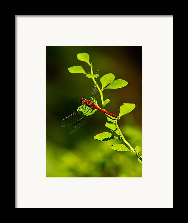 Insects Framed Print featuring the photograph Landing Pad by Frank Pietlock