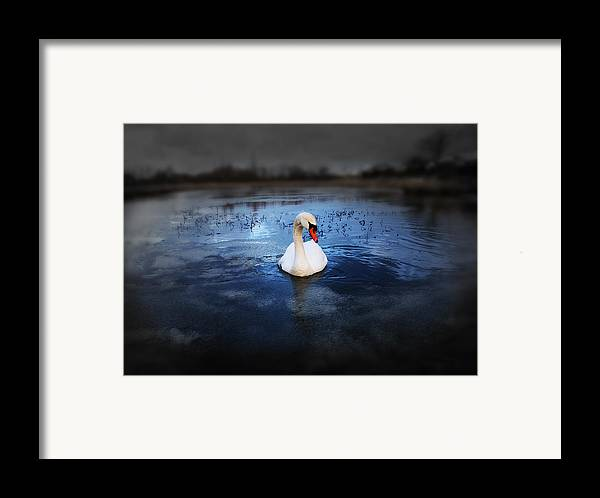 Adorable Framed Print featuring the photograph Left Behind by Svetlana Sewell