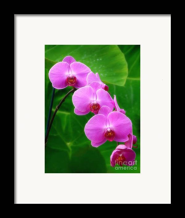 Orchid Framed Print featuring the photograph Lilac Orchid Beauties by Sue Melvin
