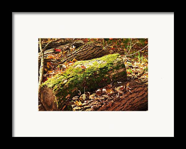 Framed Print featuring the photograph Logs by Puzzles Shum
