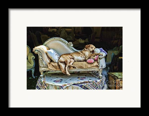 Dog Framed Print featuring the photograph Nap Time by Edward Sobuta