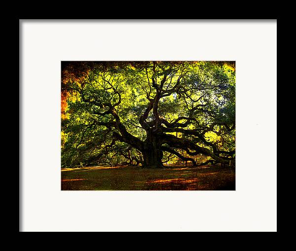 Angel Oak Framed Print featuring the photograph Old Old Angel Oak In Charleston by Susanne Van Hulst
