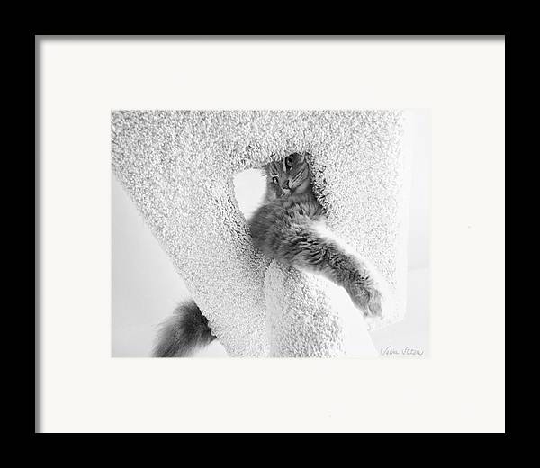 Cat Framed Print featuring the photograph On Top by Sabine Stetson