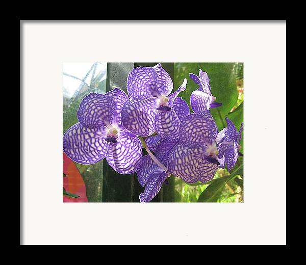 Orchid Framed Print featuring the photograph Orchid by Darren Stein