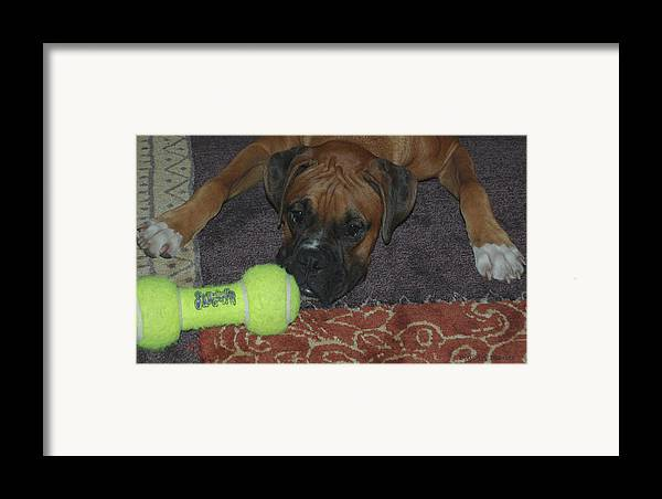 Boxer Framed Print featuring the digital art Please Play With Me by DigiArt Diaries by Vicky B Fuller