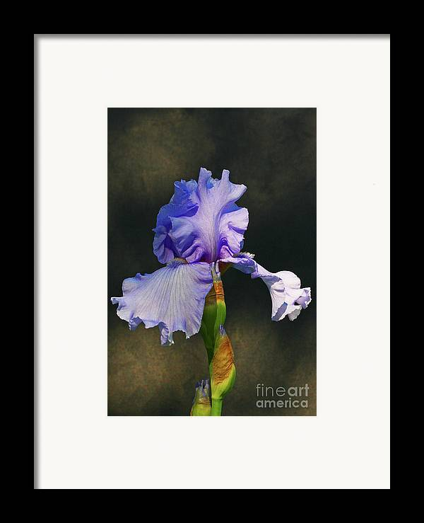 Iris Framed Print featuring the photograph Portrait Of An Iris by Steve Augustin