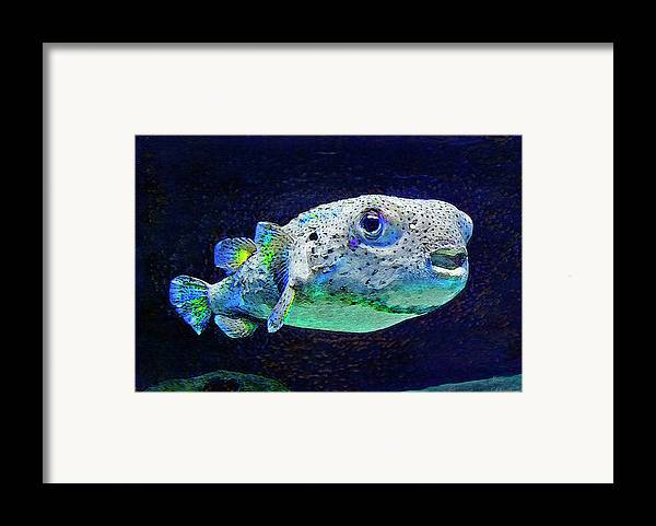 Puffer Fish Framed Print featuring the digital art Puffer Fish by Jane Schnetlage