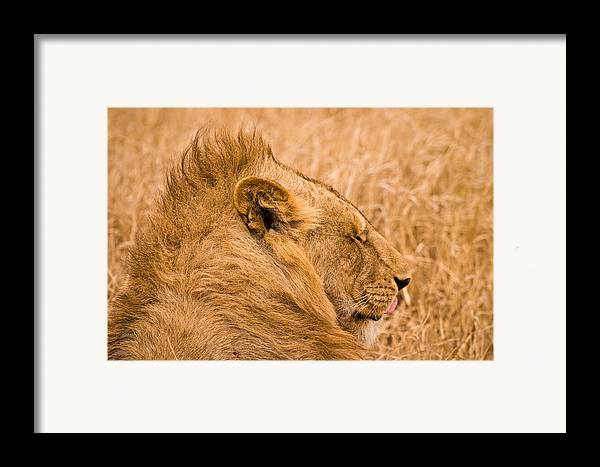 3scape Photos Framed Print featuring the photograph Punk Mane by Adam Romanowicz