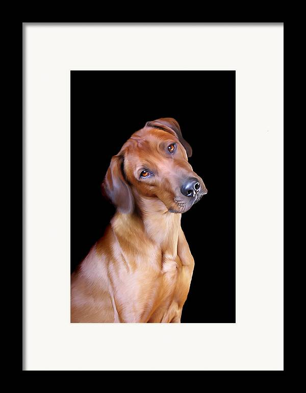 Rhodesian Framed Print featuring the digital art Rhodesian Ridgeback by Julie L Hoddinott