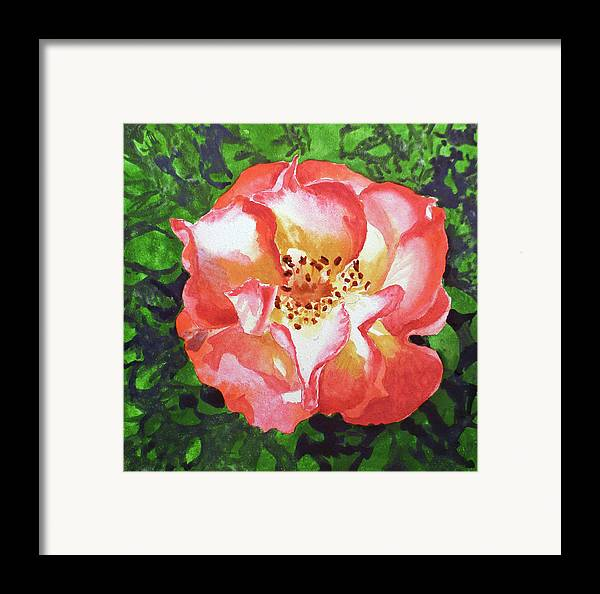 Rose Framed Print featuring the painting Rose by Irina Sztukowski