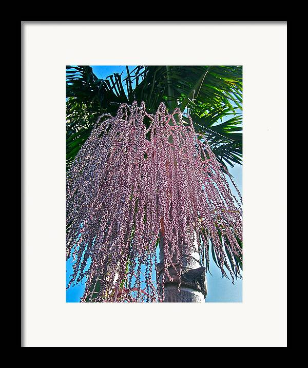 Photograph Of Flowering Palm Tree Framed Print featuring the photograph San Clemente Sunday by Gwyn Newcombe