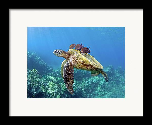 Horizontal Framed Print featuring the photograph Sea Turtle Underwater by M.M. Sweet