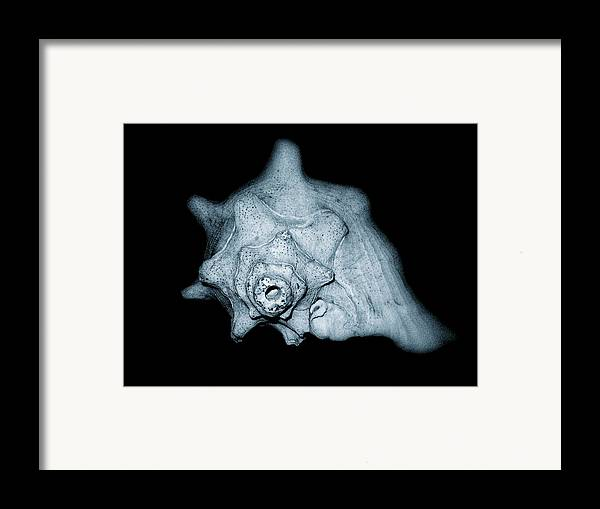Sea Framed Print featuring the photograph Shell by Amber Flowers