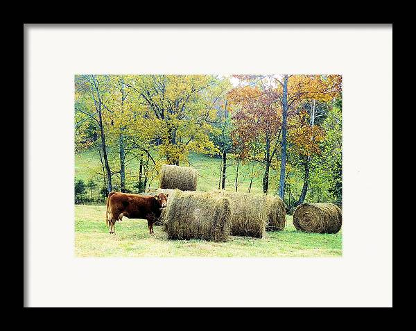 Animals Framed Print featuring the photograph Smorgasbord by Jan Amiss Photography