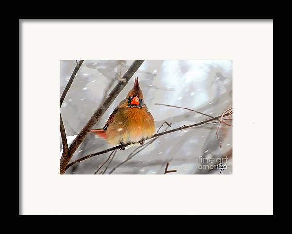 Bird Framed Print featuring the photograph Snow Surprise by Lois Bryan