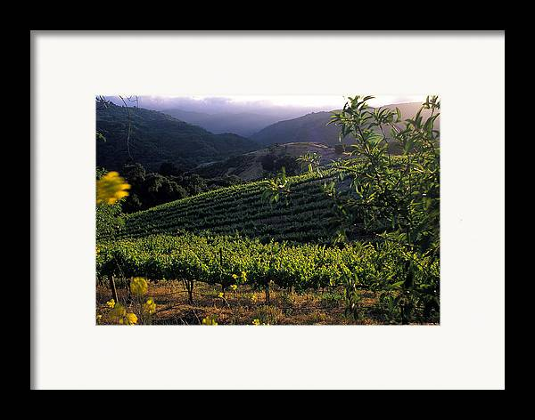 Landscape Framed Print featuring the photograph Summer Vineyard by Kathy Yates