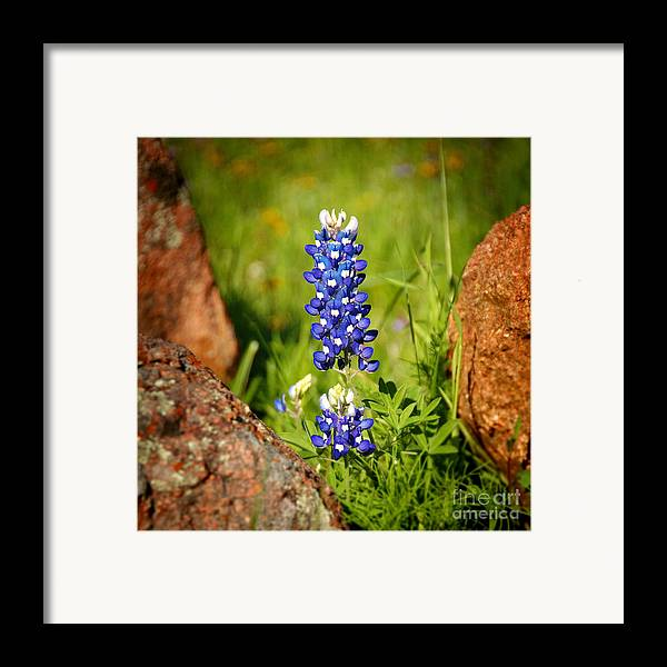 Landscape Framed Print featuring the photograph Texas Bluebonnet by Jon Holiday