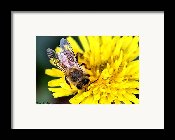 Macro Framed Print featuring the photograph The Bee by Karen M Scovill