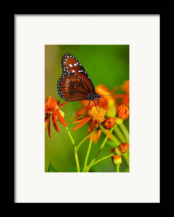 Butterfly Framed Print featuring the photograph The Soldier by Melanie Moraga