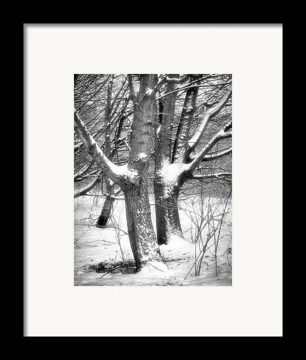 Trees Framed Print featuring the photograph Together by Wim Lanclus