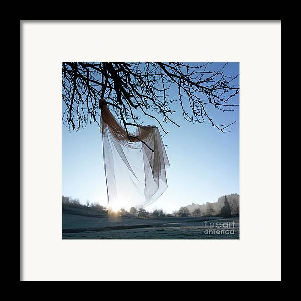Bare Tree Framed Print featuring the photograph Transparent Fabric by Bernard Jaubert