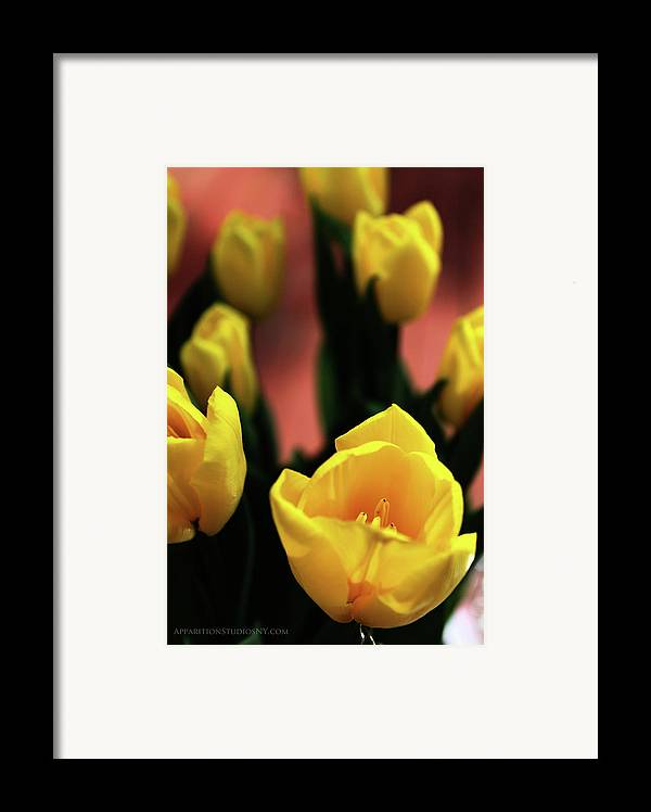 Tulips Framed Print featuring the photograph Tulips by Matt Truiano