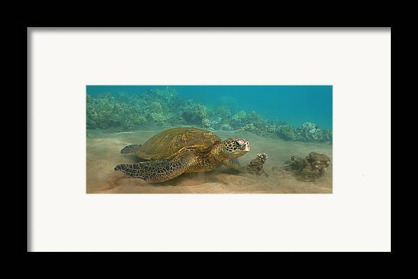 Hawaii Framed Print featuring the photograph Turtle Magic by Brian Governale