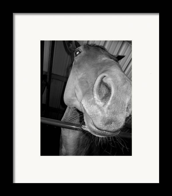 Horse Framed Print featuring the photograph Up The Nose by Lindsey Orlando