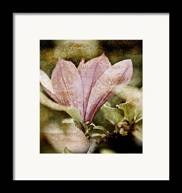 Magnolia Flower botanical Art Nostalgia vintage Magnolia Botanical Art Botanic Botany Flowers Vintage Retro Grunge Pink Floral Florals Garden Gardening Gardens Gardener Old Antique Antiques Shabby Chic country Living old Fashioned Abstract Abstracts old Time Nostalgic Scratched Beautiful Pretty Pale Sepia Black And White Bw Ancient old Times old Time Contemporary Modern Design Designs Texture Textured Painting Paintings Print Prints Brown Browns modern Art Framed Print featuring the mixed media Vintage Magnolia by Frank Tschakert