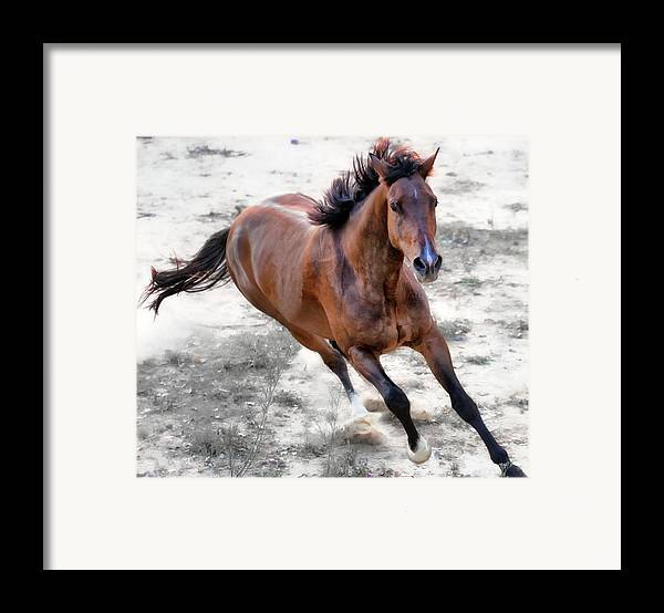Horizontal Framed Print featuring the photograph Warmblood Horse Galloping by Vanessa Mylett