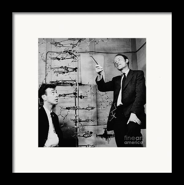 Watson Framed Print featuring the photograph Watson And Crick by A Barrington Brown and Photo Researchers