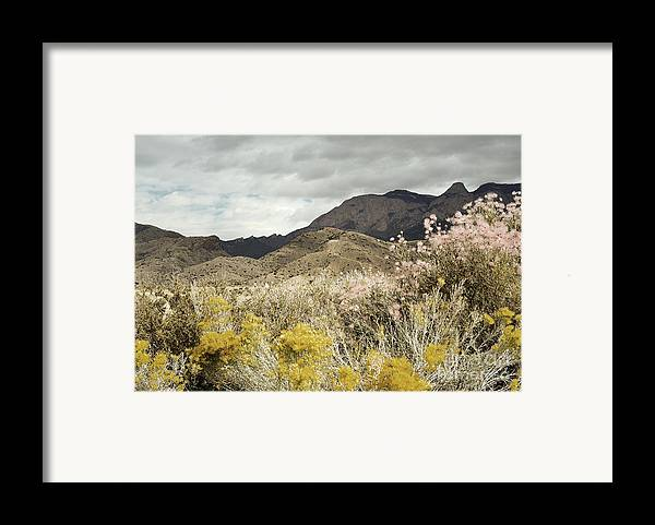 Sandia Mountains Framed Print featuring the photograph Wildflower Mountain by Andrea Hazel Ihlefeld