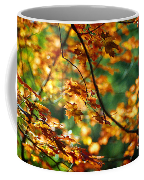 Fall Color Coffee Mug featuring the photograph Lost In Leaves by Kathy McClure