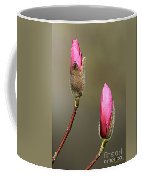 Spring Bloom Magnolia Pink Blossom Coffee Mug featuring the photograph Magnbolia Bloom by Winston Rockwell