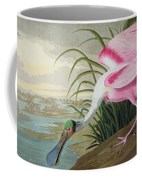 Roseate Spoonbill Coffee Mug featuring the painting Roseate Spoonbill by John James Audubon