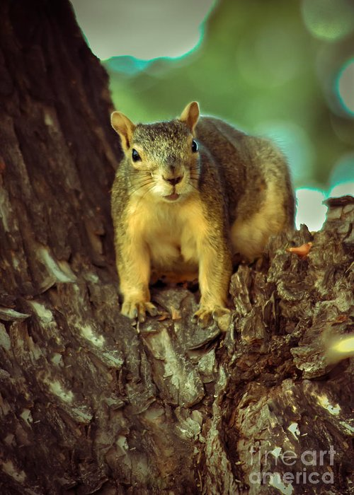 Squirrel Greeting Card featuring the photograph Fox Squirrel by Robert Bales