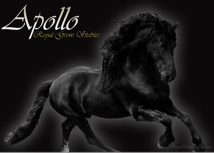 Friesian Stallion Canvas Print Greeting Card featuring the photograph Friesian Stallion by Royal Grove Fine Art