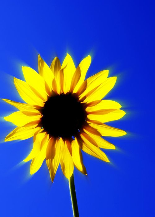 Sunflower Greeting Card featuring the photograph 083 by Marty Koch