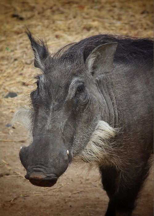 Boar Greeting Card featuring the photograph African Boar by Dave Hall