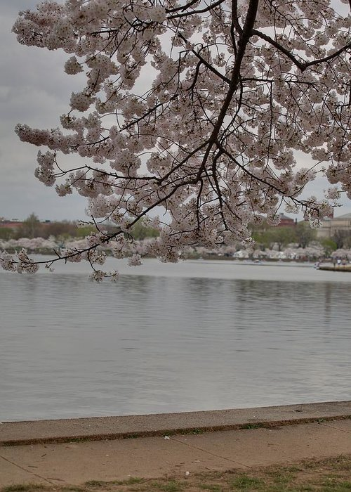 America Greeting Card featuring the photograph Cherry Blossoms - Washington Dc - 011336 by DC Photographer