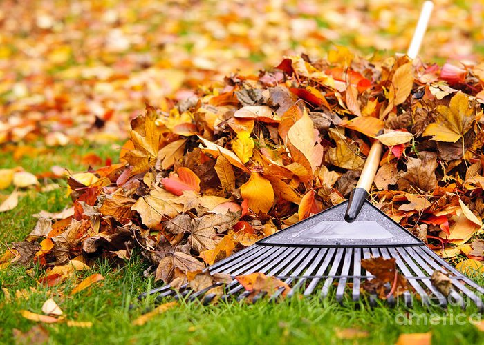 Rake Greeting Card featuring the photograph Fall Leaves With Rake by Elena Elisseeva